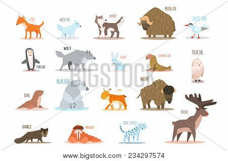 Set Of Arctic And Antarctic Animals. Fox, Wolf, Seal, Rabbit, Penguin, Sable, Walrus, Bear, Husky, M