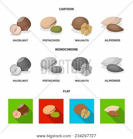 Hazelnut, Pistachios, Walnut, Almonds.different Kinds Of Nuts Set Collection Icons In Cartoon, Flat,