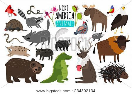 North American Animals. Animal Graphics Of North America, American Bison And Skunk, Cute Moose And L