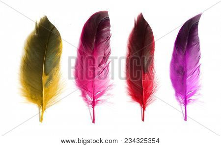 Bright colored feathers. Collection of feathers