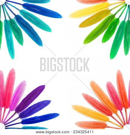 Bright feathers. Colored feather. Carnival