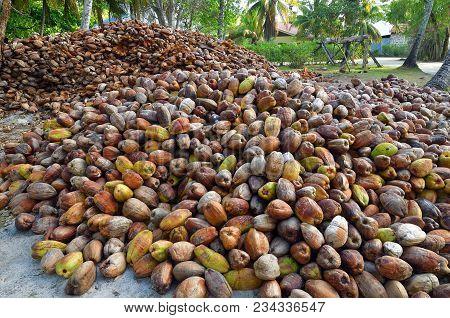 Big Pile Of The Cocos, Seychelles Island, La Digue