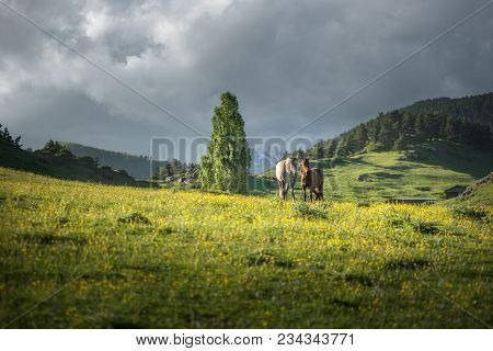 Two Horses At A Mountain Valley At Unset. Sun Lightens Horses. Landscape Of A Mountain Valley With G