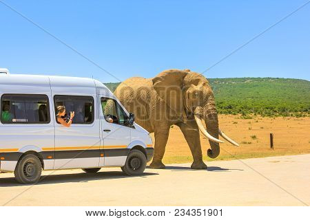 Addo, South Africa - January 3, 2014: Tourist Woman Photograph An African Elephant From A Tour Bus I