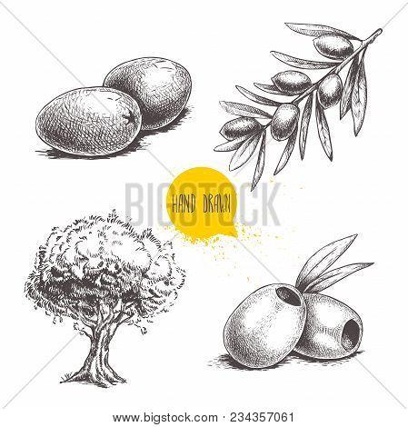 Sketch Hand Drawn Olives Set. Olive Tree, Olive Fruits , Boneless Olives And Olive Branch With Leave