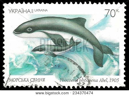 Ukraine - Circa 2002: Stamp Printed By Ukraine, Color Edition On Red Book Fauna, Shows Harbour Porpo
