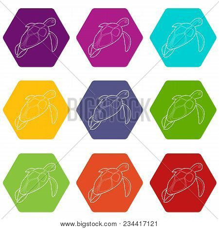 Turtle Icons 9 Set Coloful Isolated On White For Web