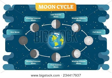 Moon Cycle Vector Illustration Diagram Poster With All Moon Phases From New To Full Moon And Waning,