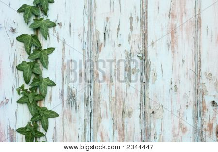 Background Ivy Climbing Wooden Boards With Flaky Paint.