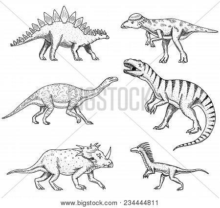 Dinosaurs Set, Triceratops, Barosaurus, Tyrannosaurus Rex, , Stegosaurus, Pachycephalosaurus Deinony