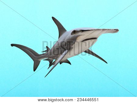 The Great Hammerhead Shark - Sphyrna mokarran is dangerous predatory fish. Animals on blue background.
