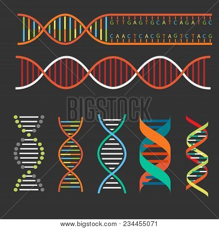 Genetics Dna Structure  And Chromosomes Illustration Education