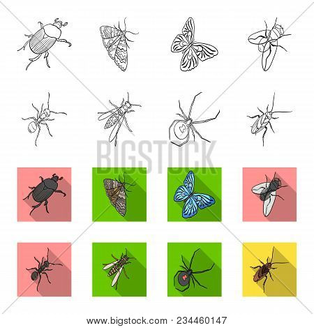 An Insect Arthropod, An Osa, A Spider, A Cockroach. Insects Set Collection Icons In Outline, Flet St