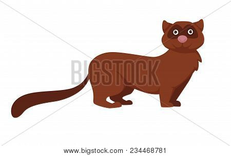 Fluffy Cute Marten With Brown Fur And Pink Nose. Exotic Pet With Adorable Muzzle, Long Tail And Shor