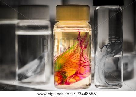 The Fish In Bottles For Biological Studies