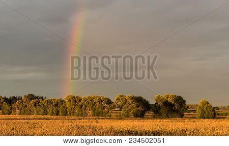 Grey Cloudy Sky With A Rainbow Over A Feild Of Maze.