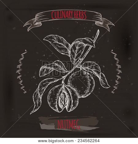 Nutmeg Aka Myristica Fragrans Hand Drawn Sketch On Black. Culinary Herbs Collection. Great For Cooki