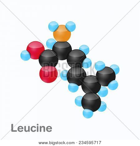 Molecule Of Leucine, Leu, An Amino Acid Used In The Biosynthesis Of Proteins, Vector Illustration