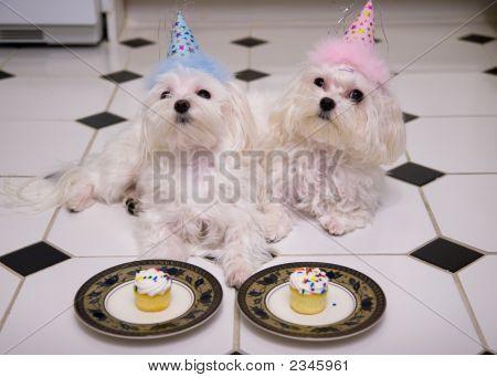 Happy Birthday Doggies!