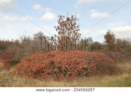 The Characteristic Vegetation Of The Trieste Karst In Autumn