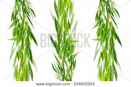 Willow Branch With Leaves On A White Background. Horizontal Photo.