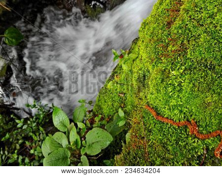 Green Moss On Rock In Forest On Waterfall Background. Colorful Bright Natural Mountain Moss Texture.