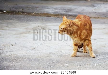 Dirty Stray Cats Eating Dry Food On The Sidewalk