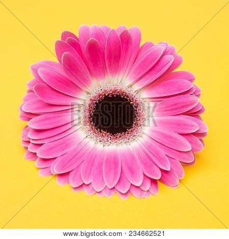Beauty Cute Pink Flower On Yellow Background