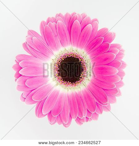 Cute Pink Flower On White Blank Background