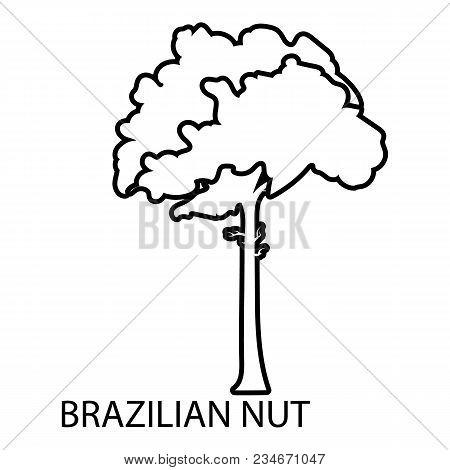 Brazilian Nut Icon. Outline Illustration Of Brazilian Nut Vector Icon For Web