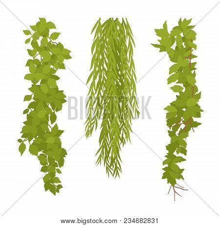 Hanging Plants Set. Liana Type Flora Growing Downwards, Outdoor Design, Garden Space, Home Decoratio