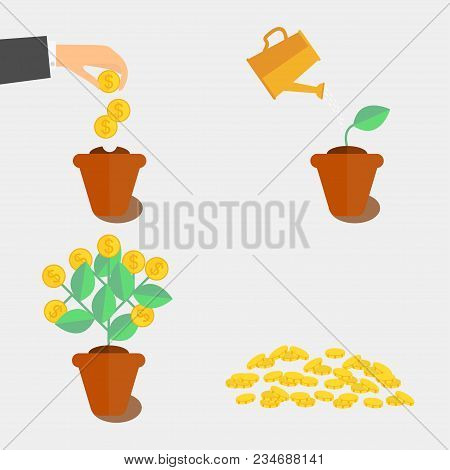 Growing Money Tree. Plant Growing Stages. Coin Seed Vector
