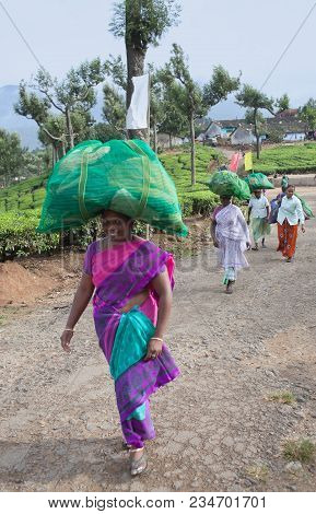 Munnar, India - November 14, 2016: Female Tea Pickers Carrying Bags With Tea Leaves At Plantation In