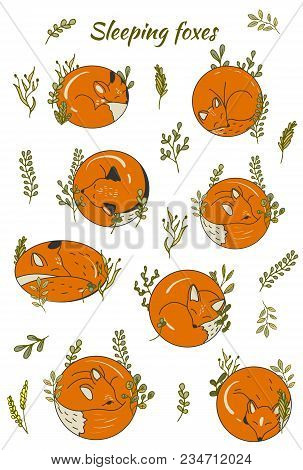 Set Of Cartoon Foxes. Round Sleeping Foxes Collection Of Cute Foxes. Vector Illustration For Childre
