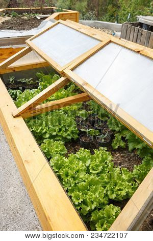 Homemade Greenhouse Raised Garden Bed With Young Lettuce And Other Vegetables Being Grown. Modern Ga