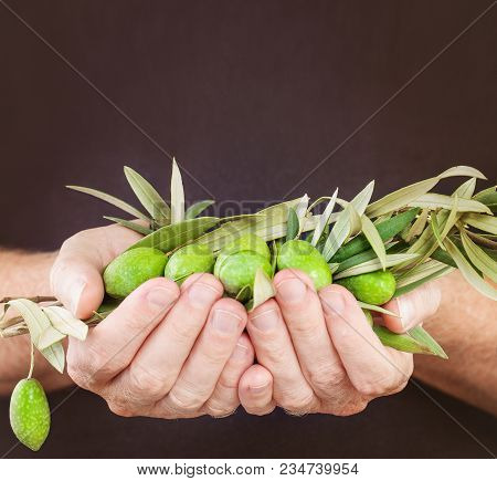 Green Kalamata Olives In Hand On Brown Background. Traditional Greek Food, Greek Cuisine