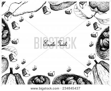 Vegetable And Fruit, Illustration Frame Of Hand Drawn Sketch Of  Fresh Chayote Or Sechium Edule And