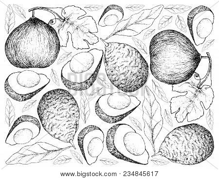 Exotic Fruit, Illustration Wall-paper Background Of Hand Drawn Sketch Of Casaba Melon And Avocado Or