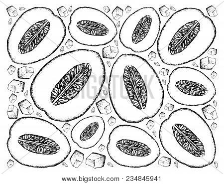 Exotic Fruit, Illustration Wall-paper Background Of Hand Drawn Sketch Of Honeydew Melon Or Cucumis M