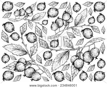 Berry Fruits, Illustration Wall-paper Background Of Hand Drawn Sketch Bunch Of European Nettle Tree,