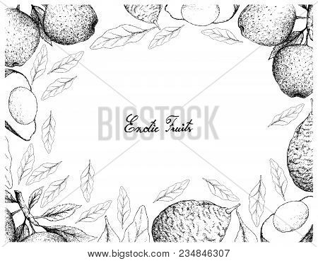 Exotic Fruit, Illustration Frame Of Hand Drawn Sketch Of Apple Or Malus Pumila And Avocado Or Persea