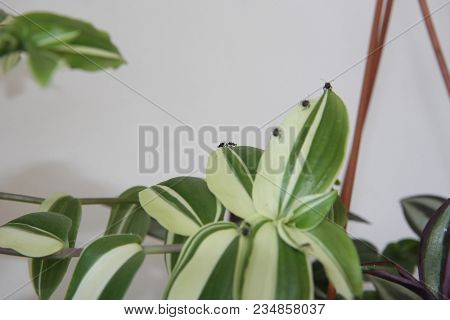 Small Insect Fighting On The Leafs Of Terrace Plants