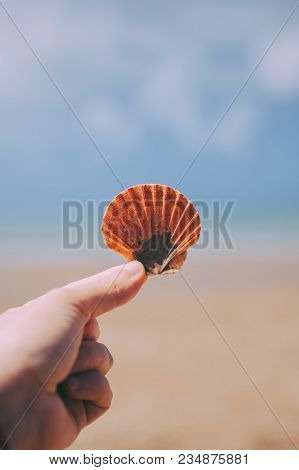 Hand Holding A Seashell. Woman Hand With A Seashell In Blue Sky And Ocean Background. Closeup View O
