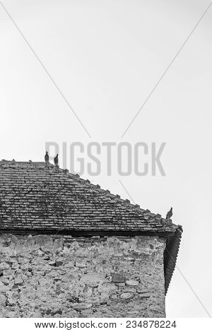 Three Pigeons Perched On The Roof Ridge Of The Guard Tower At Calnic Citadel, Transylvania, Romania,