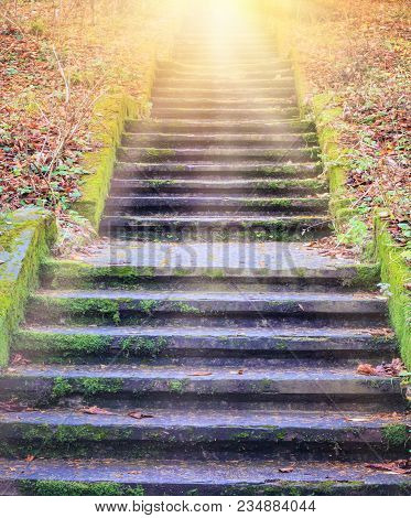 Way To God .  Bright Light From Heaven .  Religious Background  . Sunlight In The Green Forest .  Do