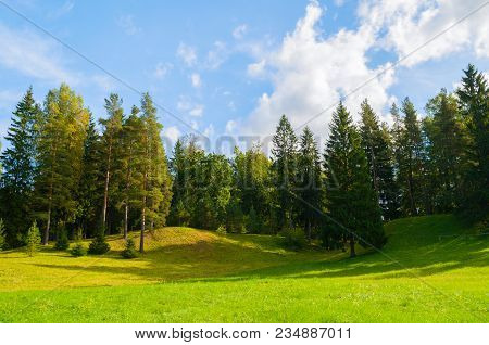 Forest Spring Landscape - Dense Forest Trees In The Valley In Sunny Weather, Forest Trees Under Blue