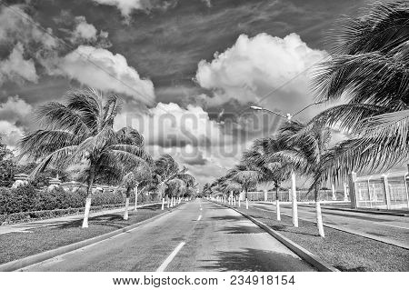 Exotic Highway Road With Green Palm Trees In Sunny Windy Weather Outdoor On Blue Sky With White Clou
