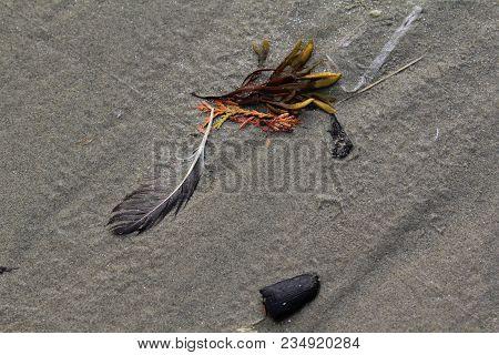 Detritus On A Sandy Beach On The Oregon Coast