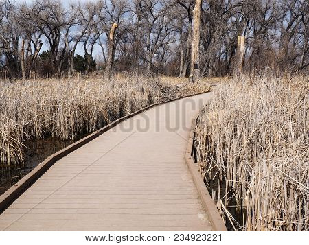 A Composite Decking Walkway In A Marsh Area.  The Walkway Is Surrounded By Reeds In Water And Severa