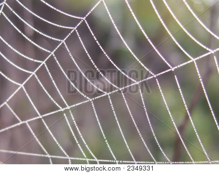 Spider'S Web With A Drops